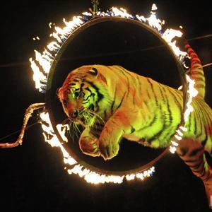 Цирки Верхней Туры